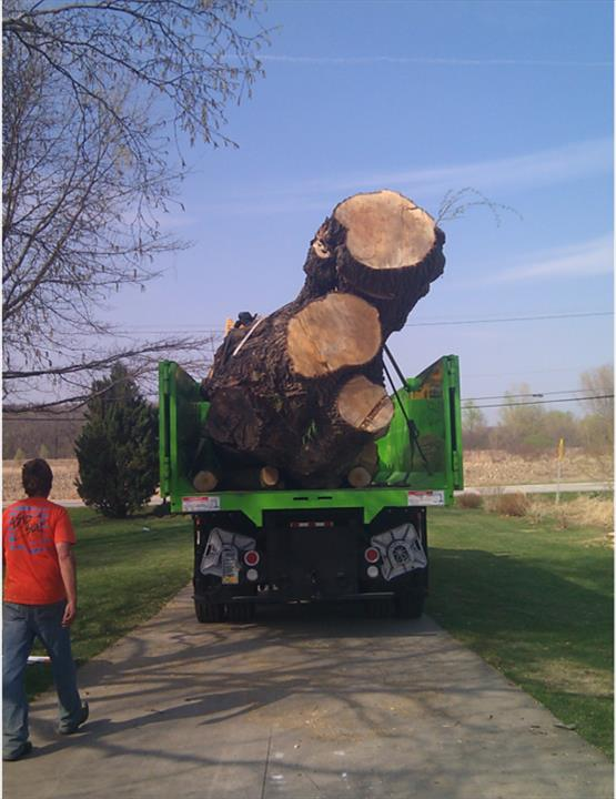 Russ's Tree Service - Tree Service - Muskego, WI - Thumb 2